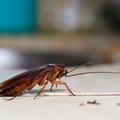 Pest Control Bendigo (@pestcontrolbendigo) Avatar