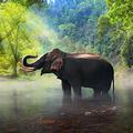 Elephant Wall A (@elephantwallart) Avatar
