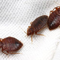 Pest Control Wynnum (@pestcontrolwynnum) Avatar