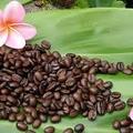 kona coffee (@konacoffee1) Avatar