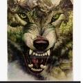 Don (@wolves63) Avatar