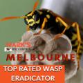 Wasp Removal Melbourne (@waspremovalau) Avatar