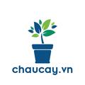 Chậu Cây (@chaucay) Avatar