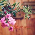 Cua Gạo Garden (@cuagaogarden) Avatar