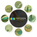 Carpet Cleaning Mulgrave (@carpetcleaningmulgrave) Avatar