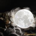 Lunar Lamps (@lunarlamps) Avatar