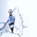parfumscanada (@parfumscanada) Avatar