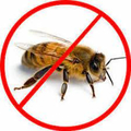 Bees Control Redland (@beescontrolredland) Avatar