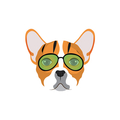 Merle French Bulldog (@merlefrenchbdog) Avatar