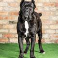 Protection Dogs Worldwide (@protectiondogsworldwide) Avatar