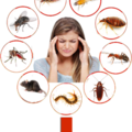 Best-household-pest-control-services (@household-pest-control) Avatar