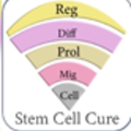Stem Cell Treatment  bangladesh (@stemcellbangla) Avatar
