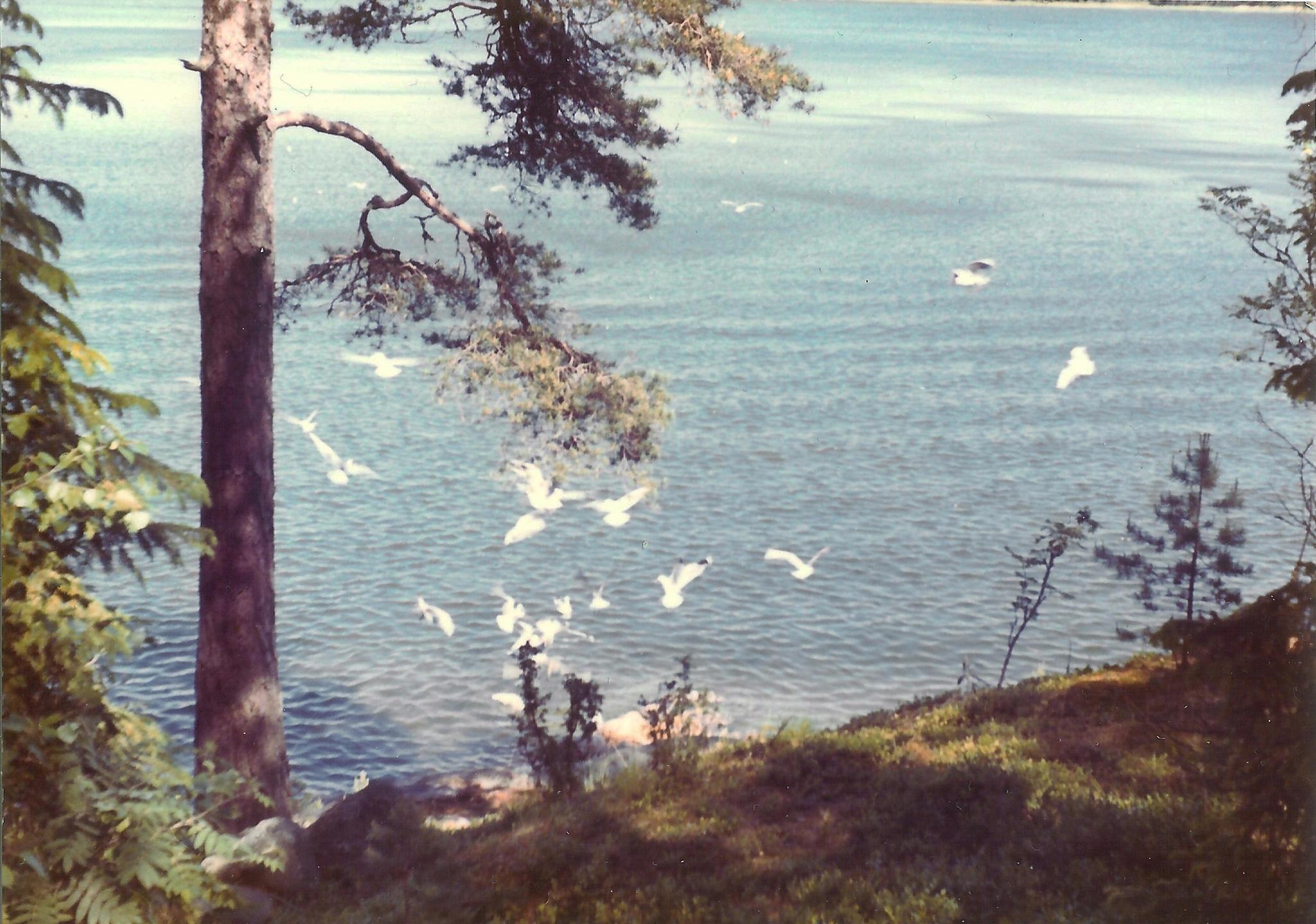 Johan Hyttinen (@hyttinen) Cover Image