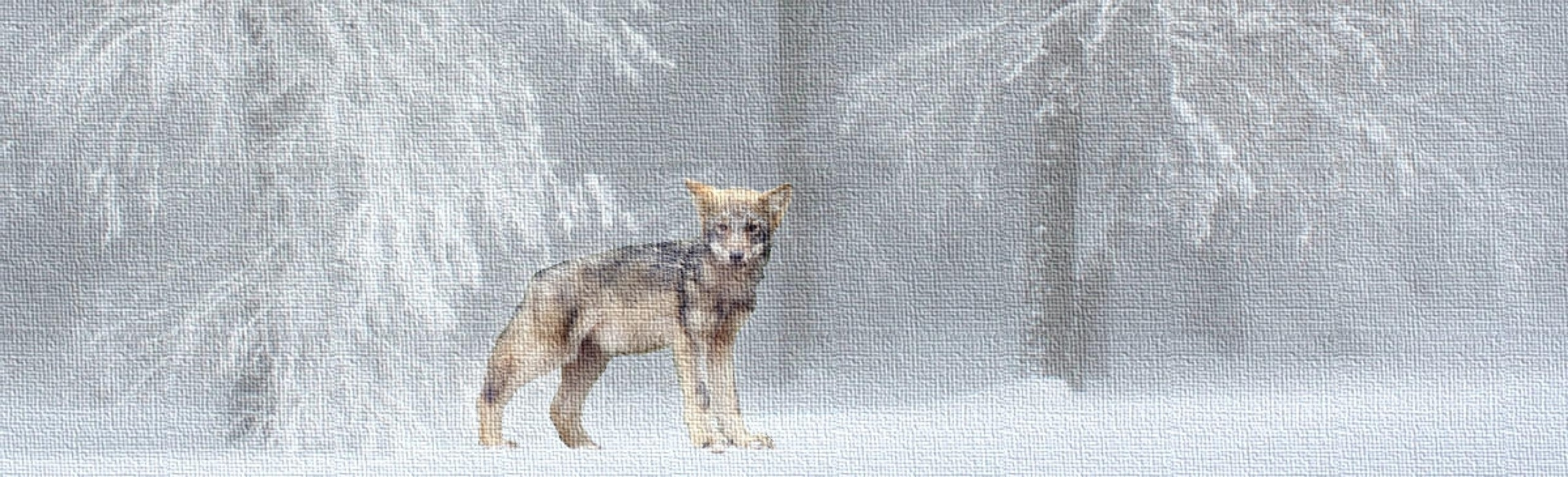 Peuple Loup (@peupleloup) Cover Image