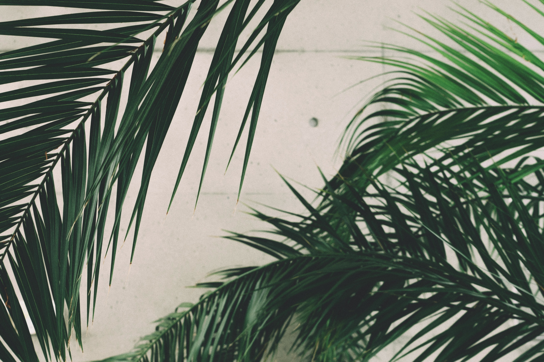 yamada` (@yemada) Cover Image