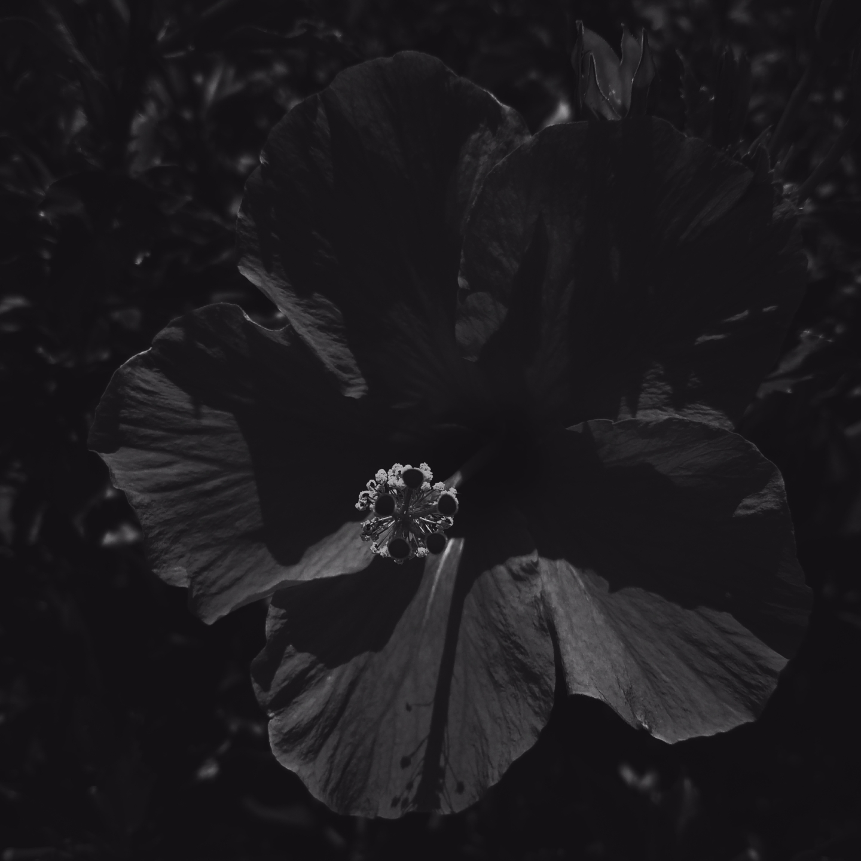 Ian Cruz (@sixthrealmphotography) Cover Image