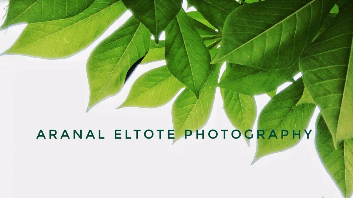 Aranal Eltote (@aranal) Cover Image