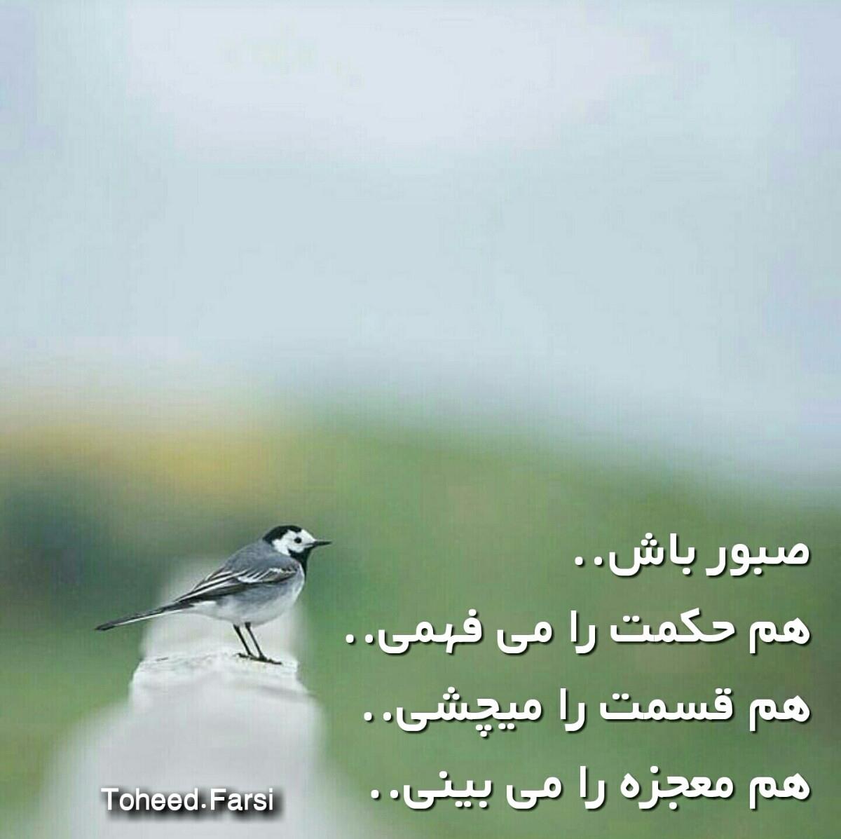 Wahed (@wahedsdi) Cover Image