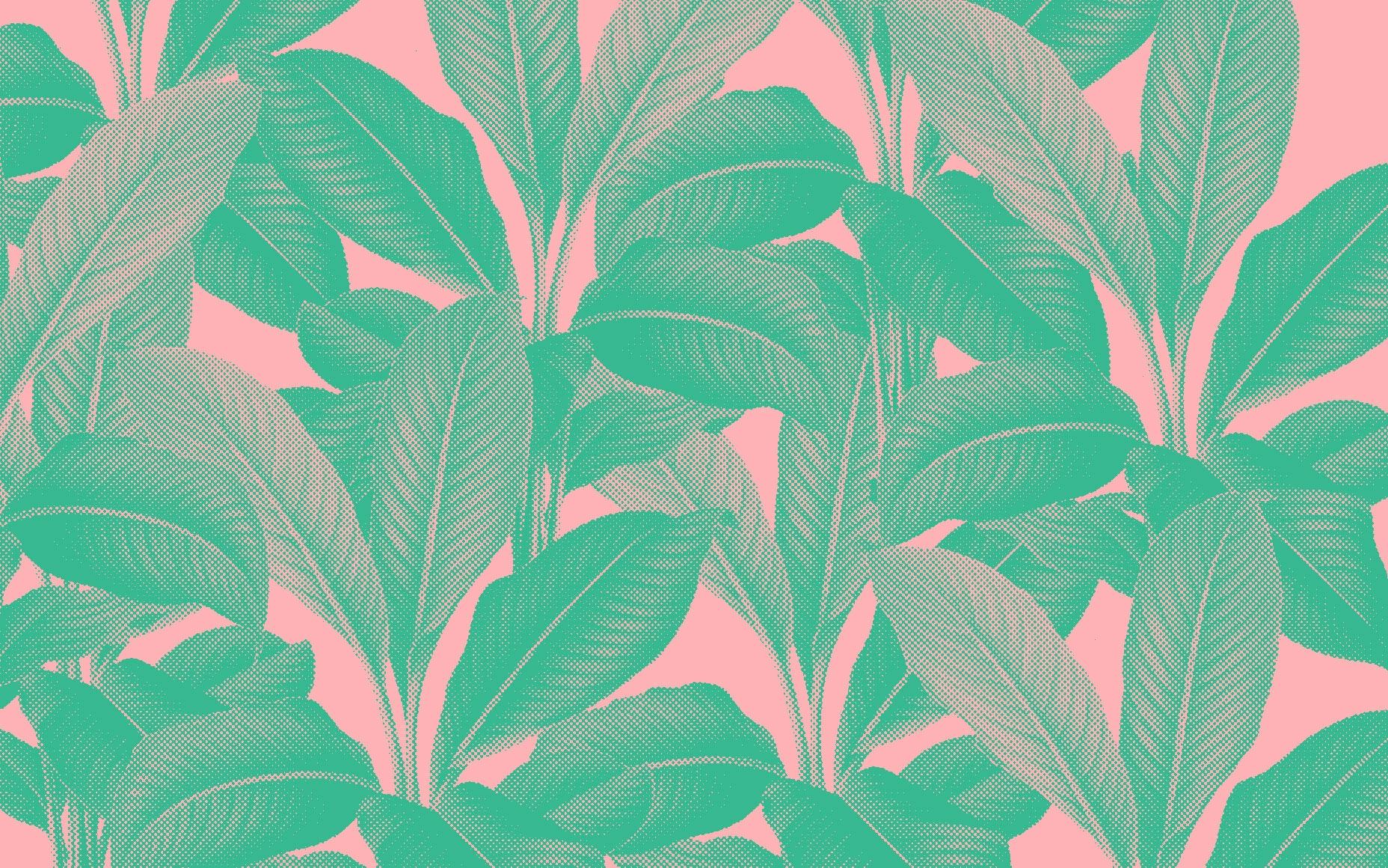 Raquel Leite (@leiteraquel) Cover Image