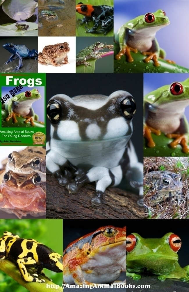 animal facts posters (@freeanimalfact) Cover Image