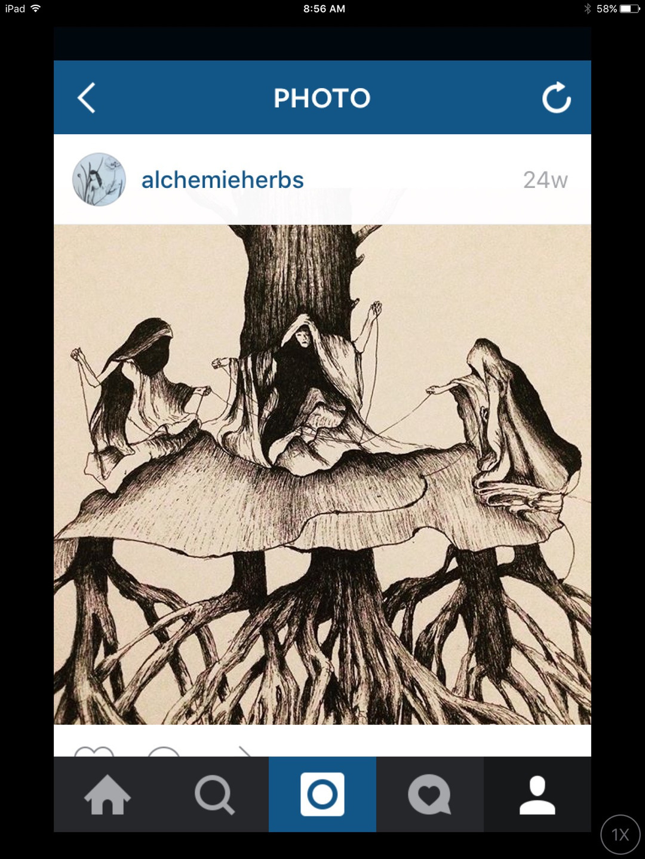 lucresia schultz (@alchemieherbs) Cover Image