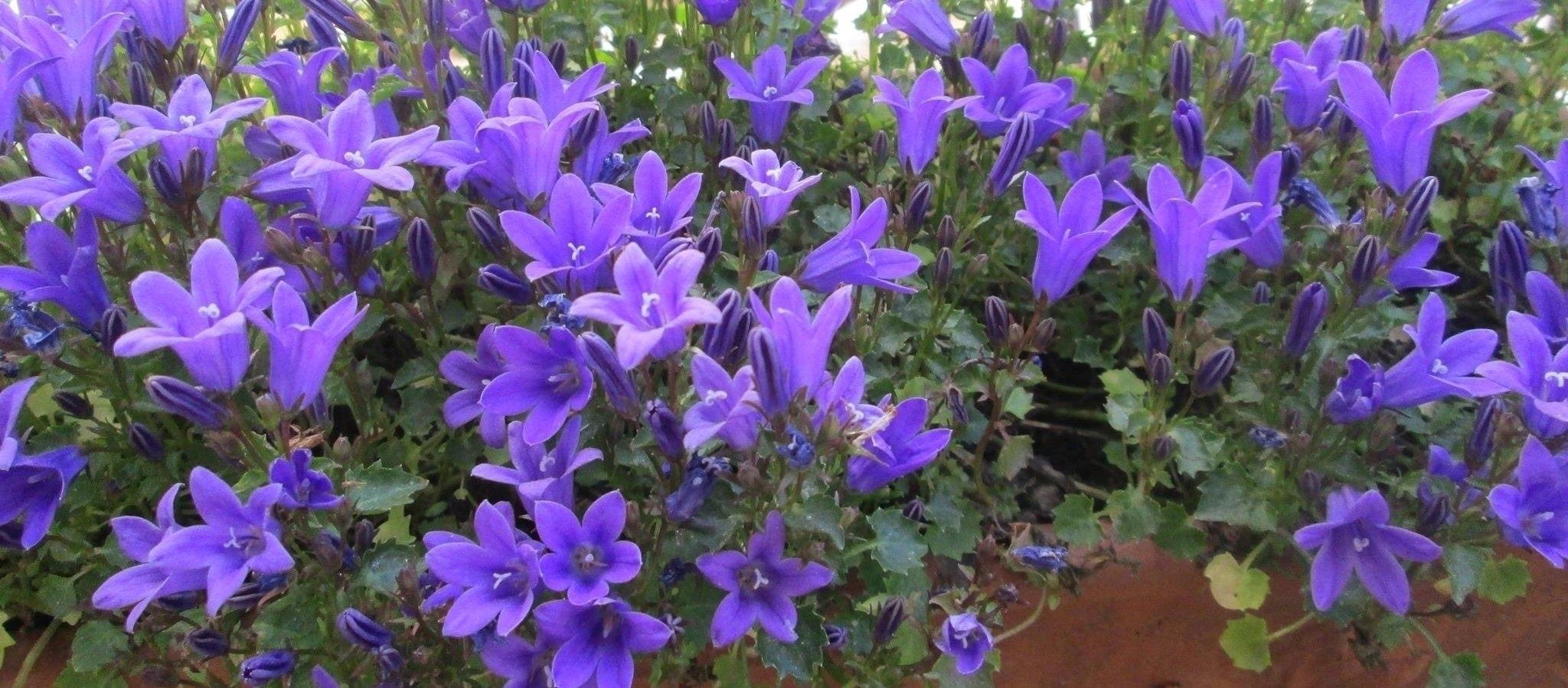 Purple Praise (@purplepraise) Cover Image