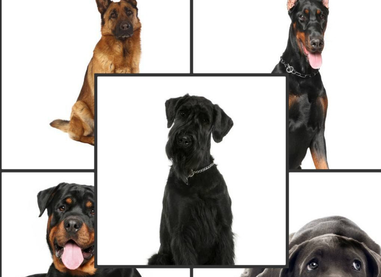 Simly For Dogs (@simplyfordogs) Cover Image