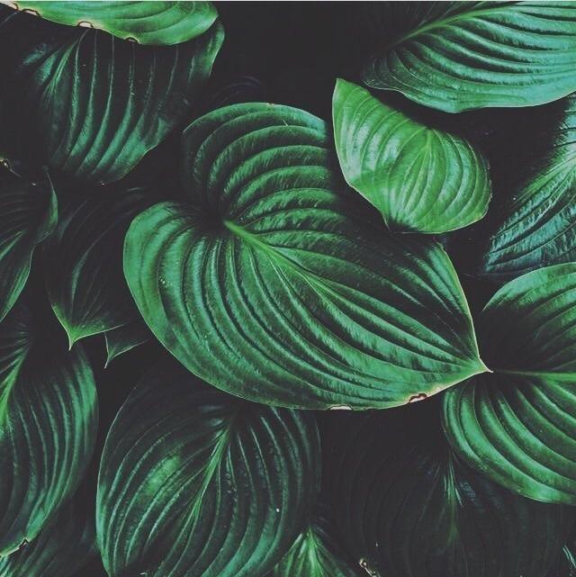 Maiara (@maiaranovaiis) Cover Image