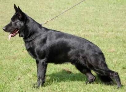 Marysville Dog Training  (@marysvilledogtraining) Cover Image