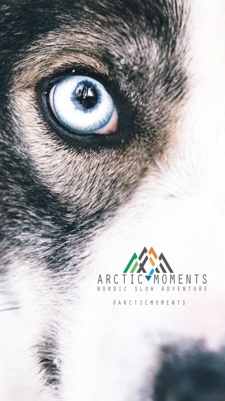 Arctic Moments (@arcticmoments) Cover Image