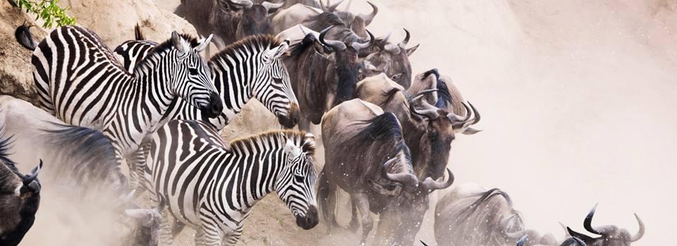 Kencher Tours- Best Tanzania Safari Tours (@kenchertours) Cover Image