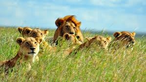 Tanzania Safari Tours (@augustineadventure) Cover Image