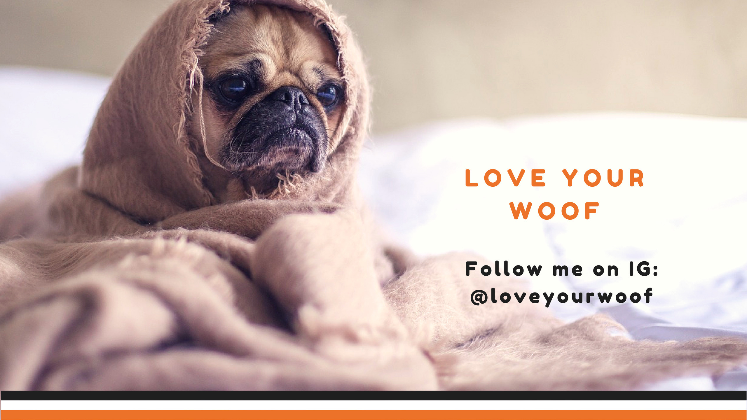 Alice Sparkle (@loveyourwoof) Cover Image