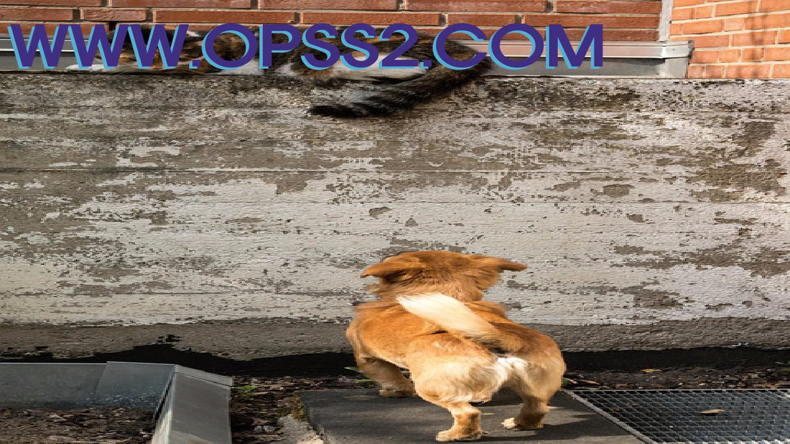 구미키스방 (@gumikissbangopss) Cover Image