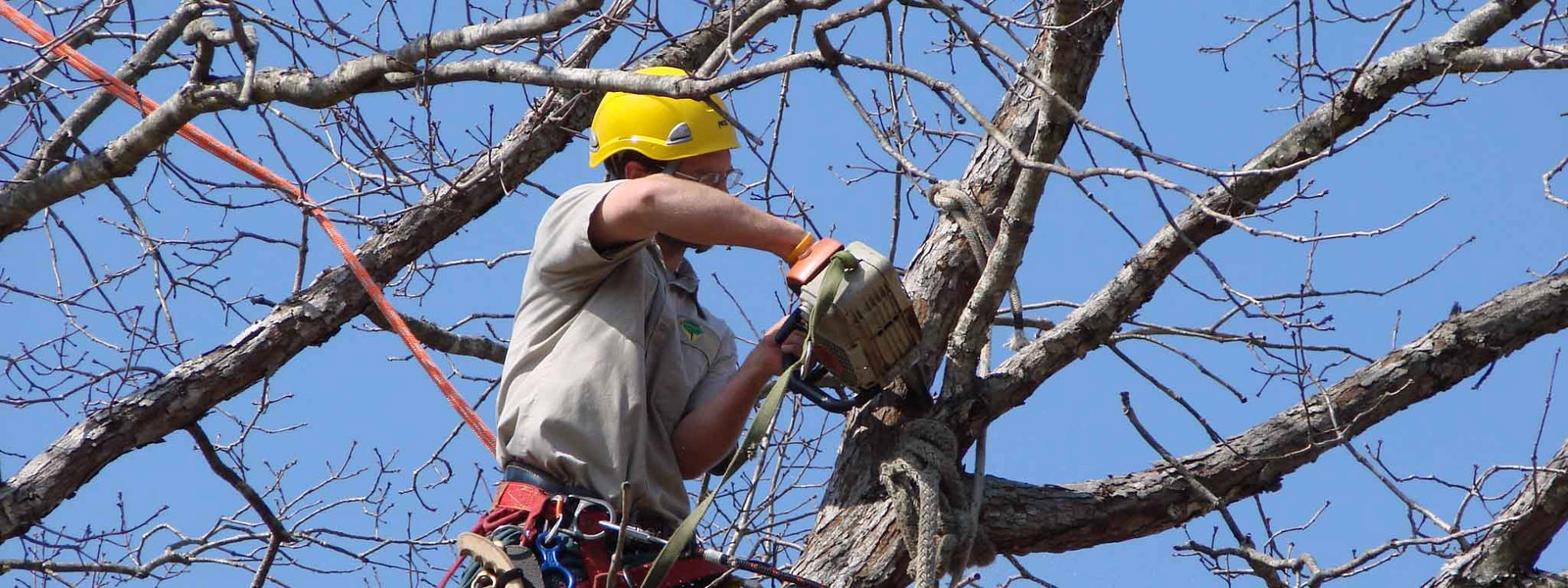 Tree Service Sunshine coast (@skylinetreess) Cover Image