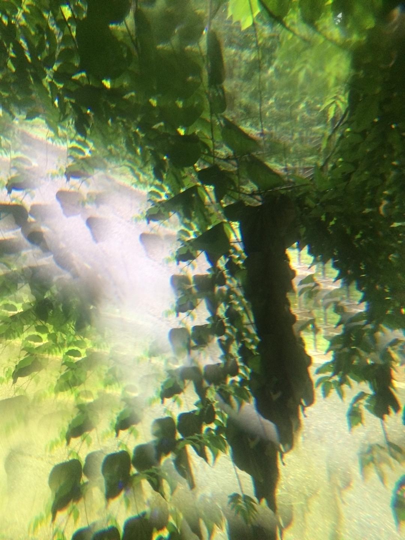 fractal forest (@fractalforest) Cover Image