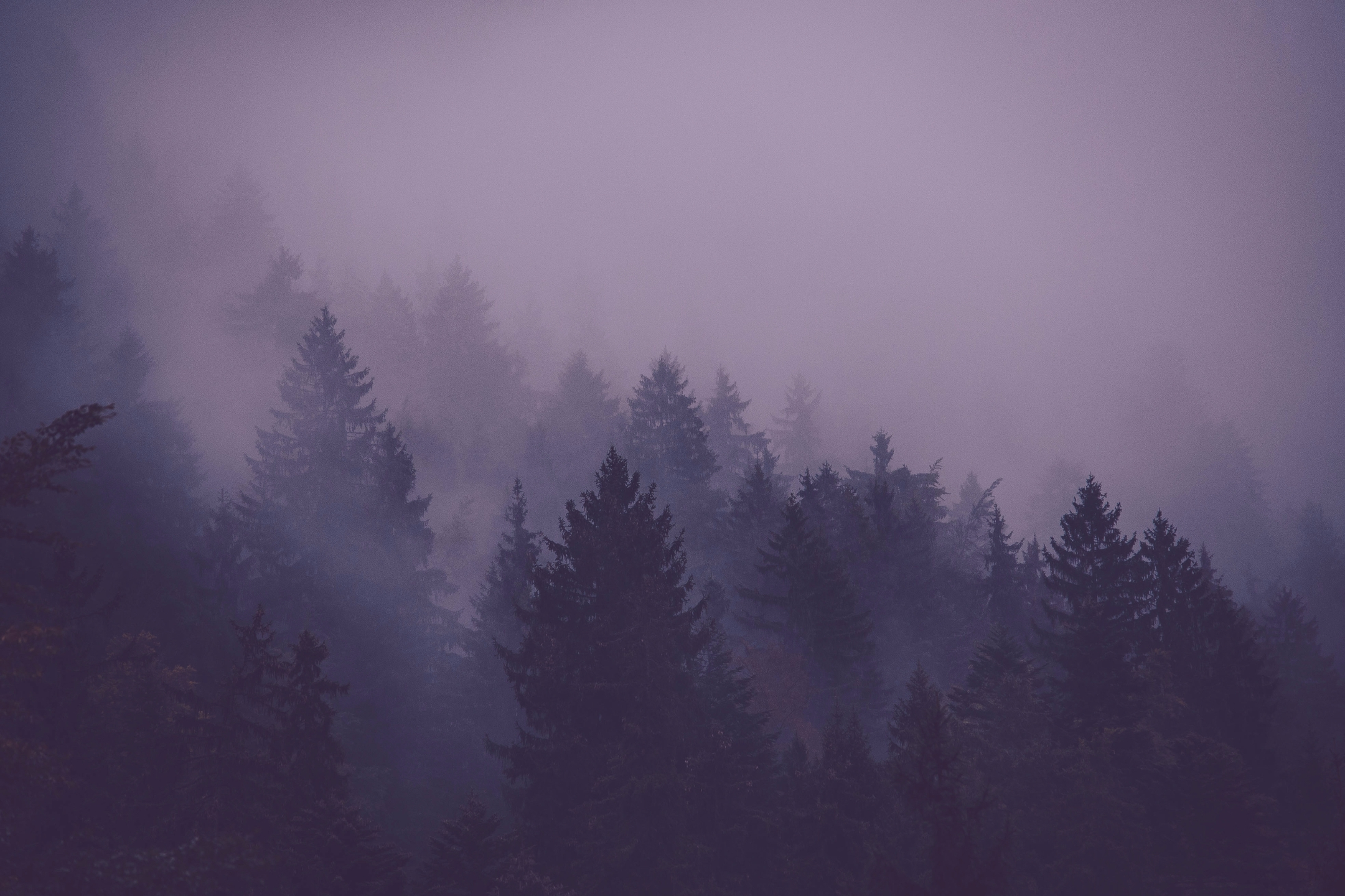 Nikki (@the_arcane_wilderness) Cover Image