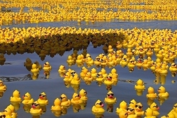 @expoduck Cover Image