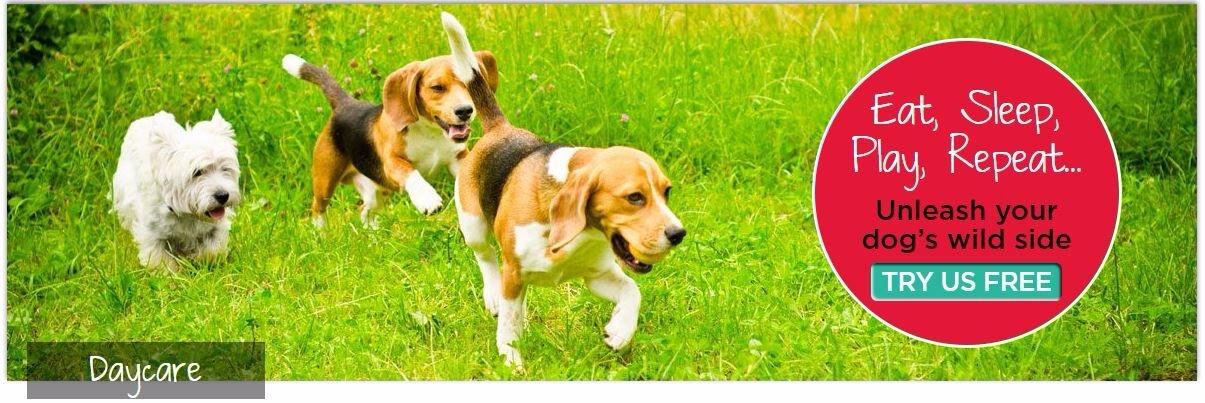 Doggies (@doggiesgonewild) Cover Image