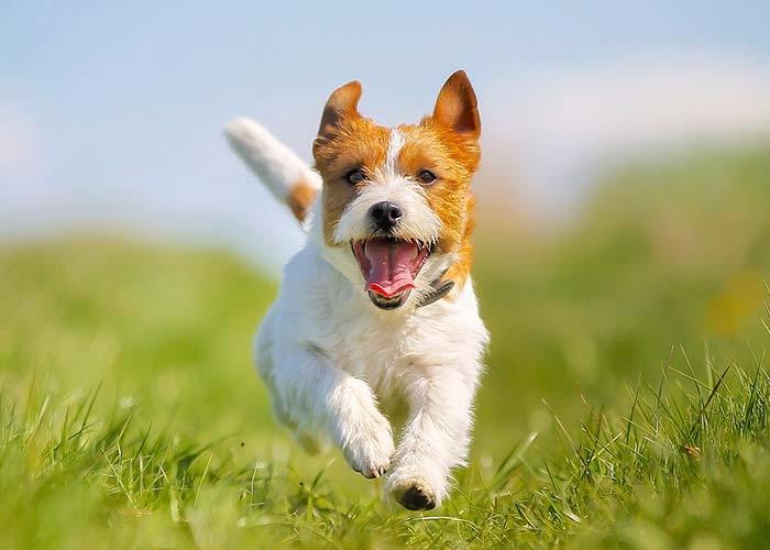 DOG (@mydogfit) Cover Image