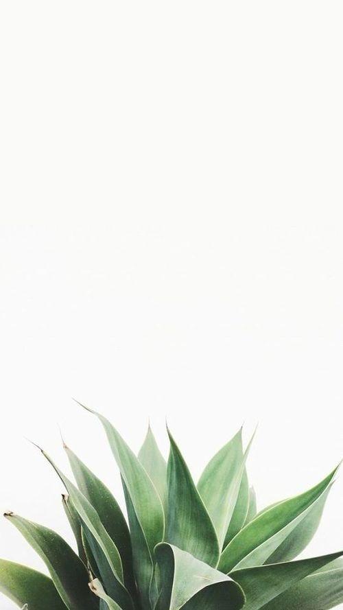 (@mariayolis) Cover Image