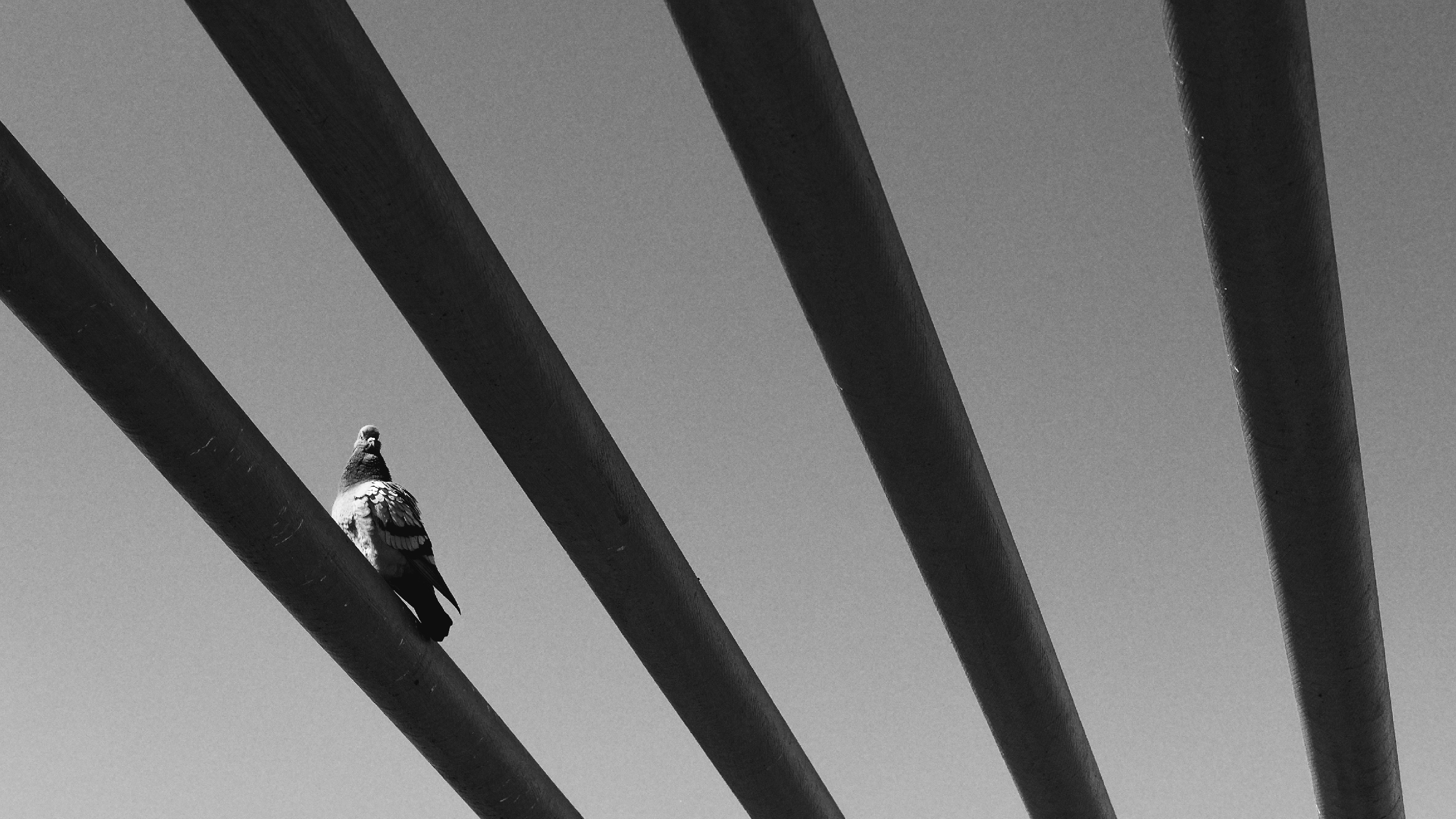 Tobias Nilsson (@nilssont) Cover Image