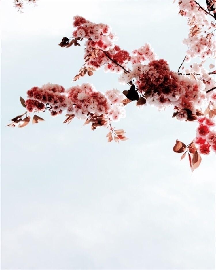 Alba.bohm (@albabohm) Cover Image