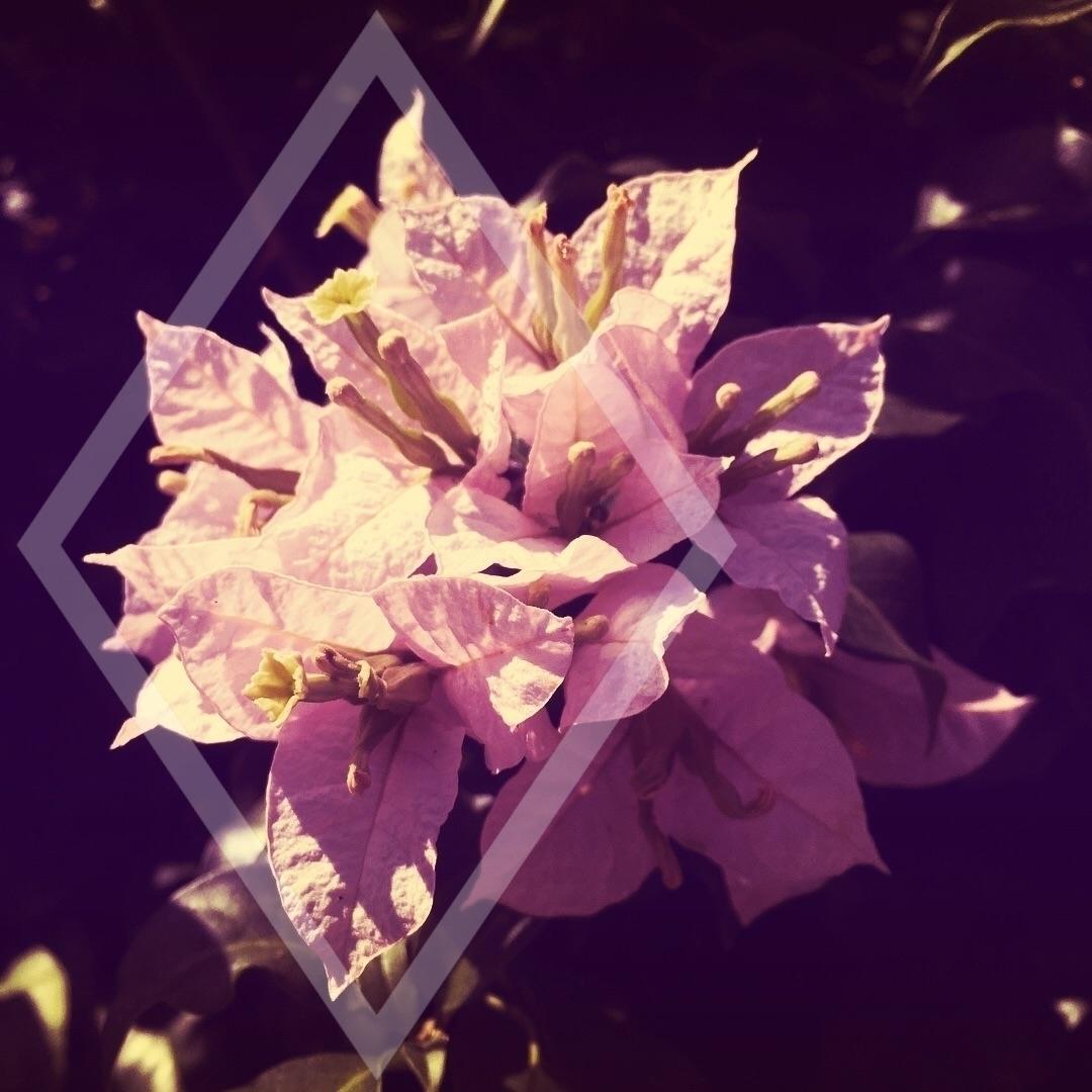 Lucas R (@llukasr) Cover Image