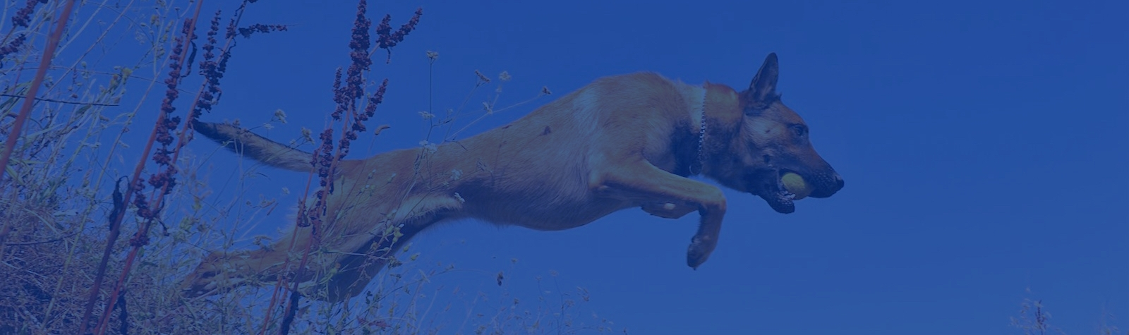Citadel Protection Dogs LLC (@citadelk9) Cover Image