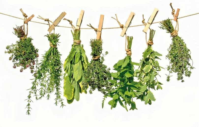 Herboristeria Online (@herboristeriaonline) Cover Image