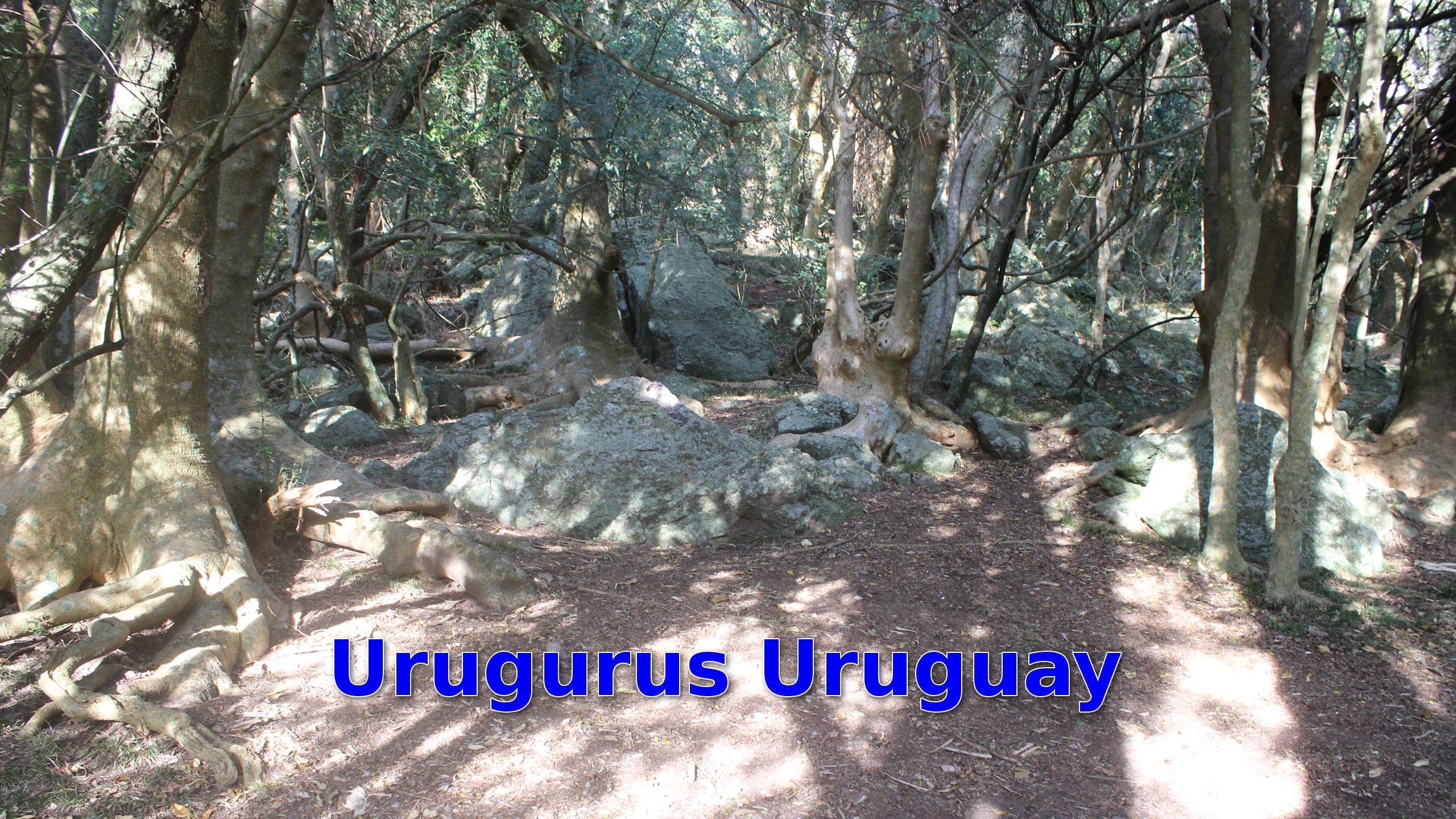 Urugu (@uruguru) Cover Image