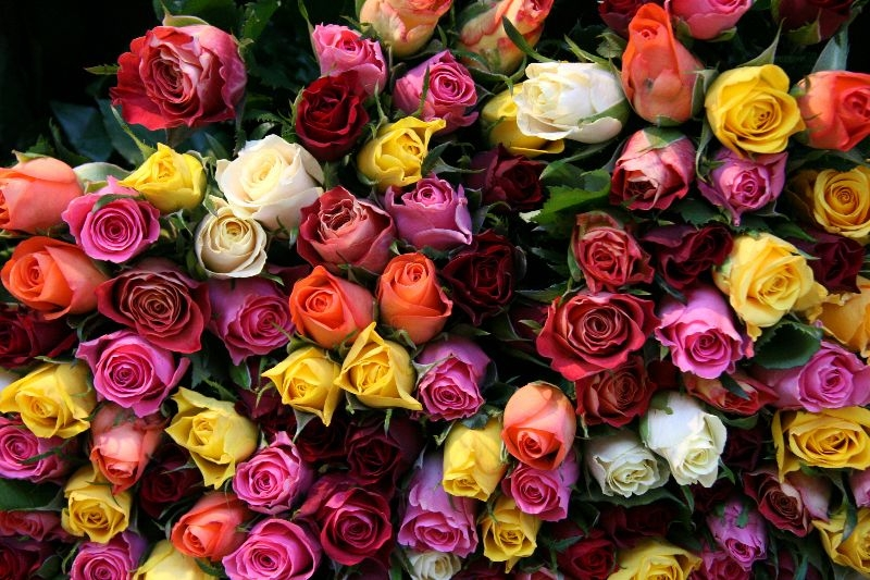 Flower Delivery Beverly Hills (@flowerhills) Cover Image