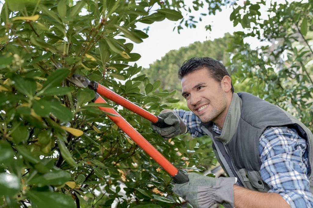 Tree Service Murfreesboro TN (@treeservicetn) Cover Image