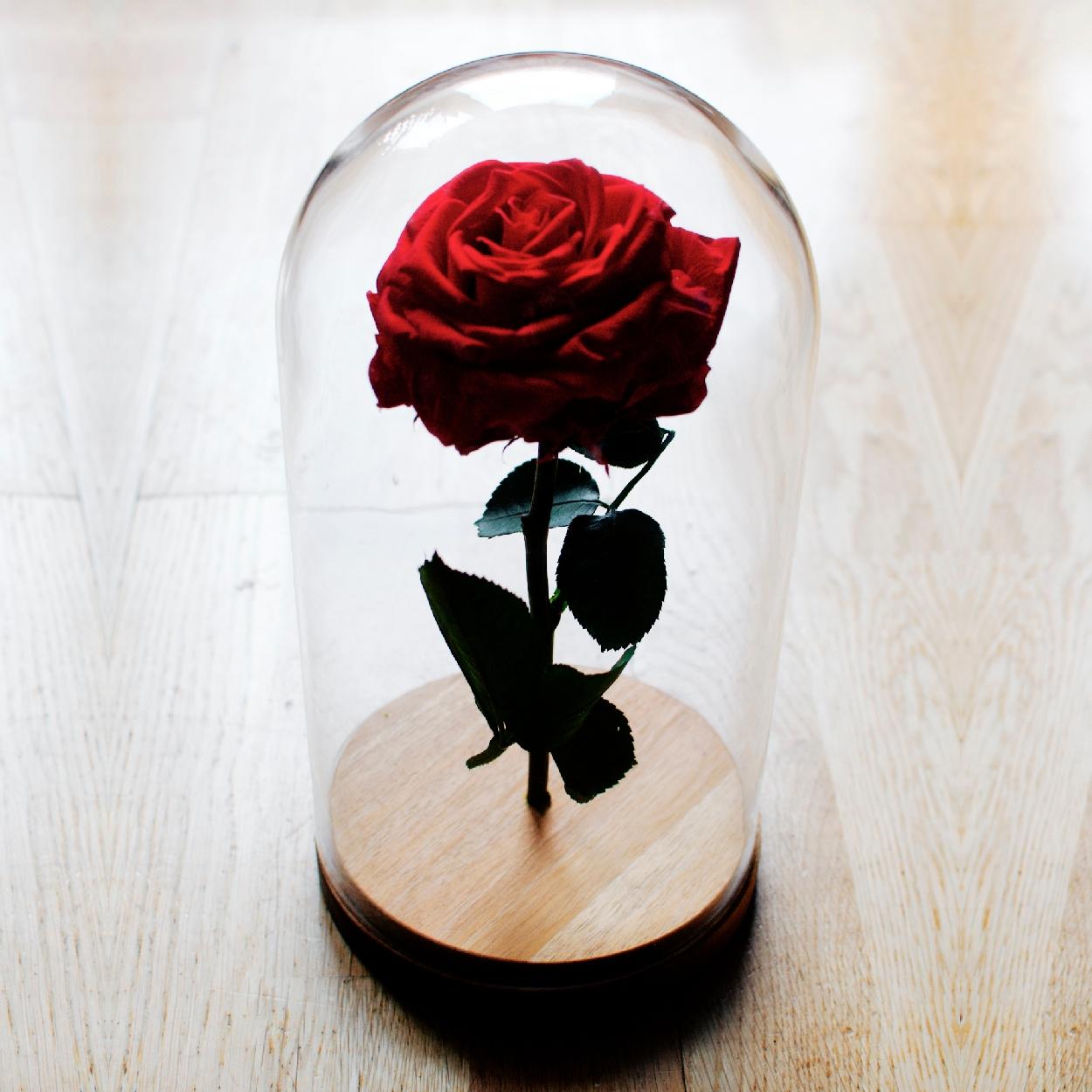 Rosa Stabilizzata (@rosastabilizzata) Cover Image